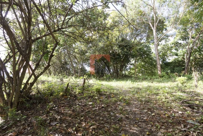 1800 SqM Elevated Lot for Sale in Maria Luisa Park (2)